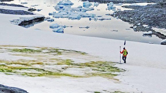 El cambio climático está tiñendo de verde a la Antártida
