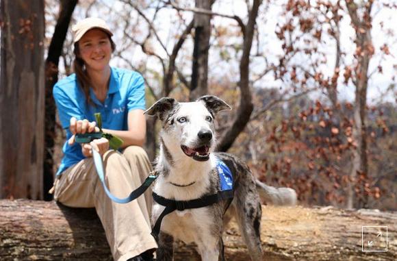Foto: USC Detection Dogs For Conservation/Handout via REUTERS.