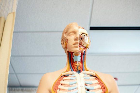 Gracias a una investigación sobre el cáncer de próstata, descubren nuevo órgano en la garganta