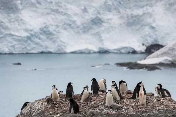Científicos buscan evitar que el coronavirus llegue a la Antártida