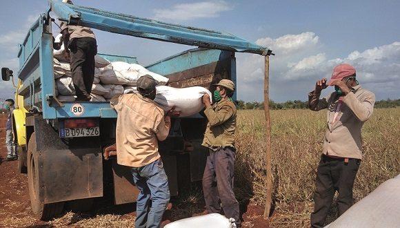 Más de 93 mil cubanos incorporados al trabajo desde enero pasado