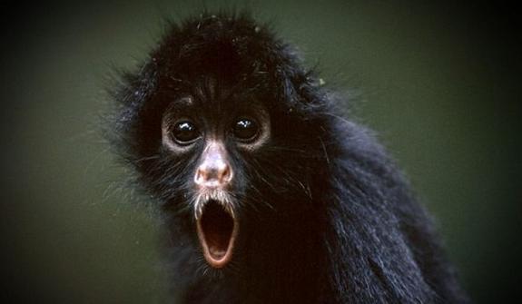 """Anoche sí chifló el mono"""