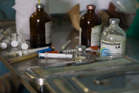 Trabaja Cuba en la producción de medicamentos de uso veterinario