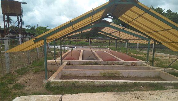 Bateria de Biodigestores tubulares UAM Guatao