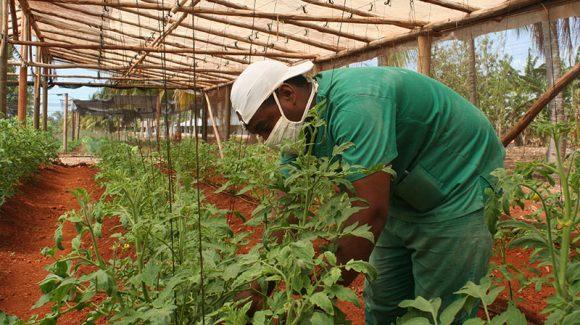 agricultura e1620052888134