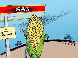 New York Times: Las consecuencias del maíz